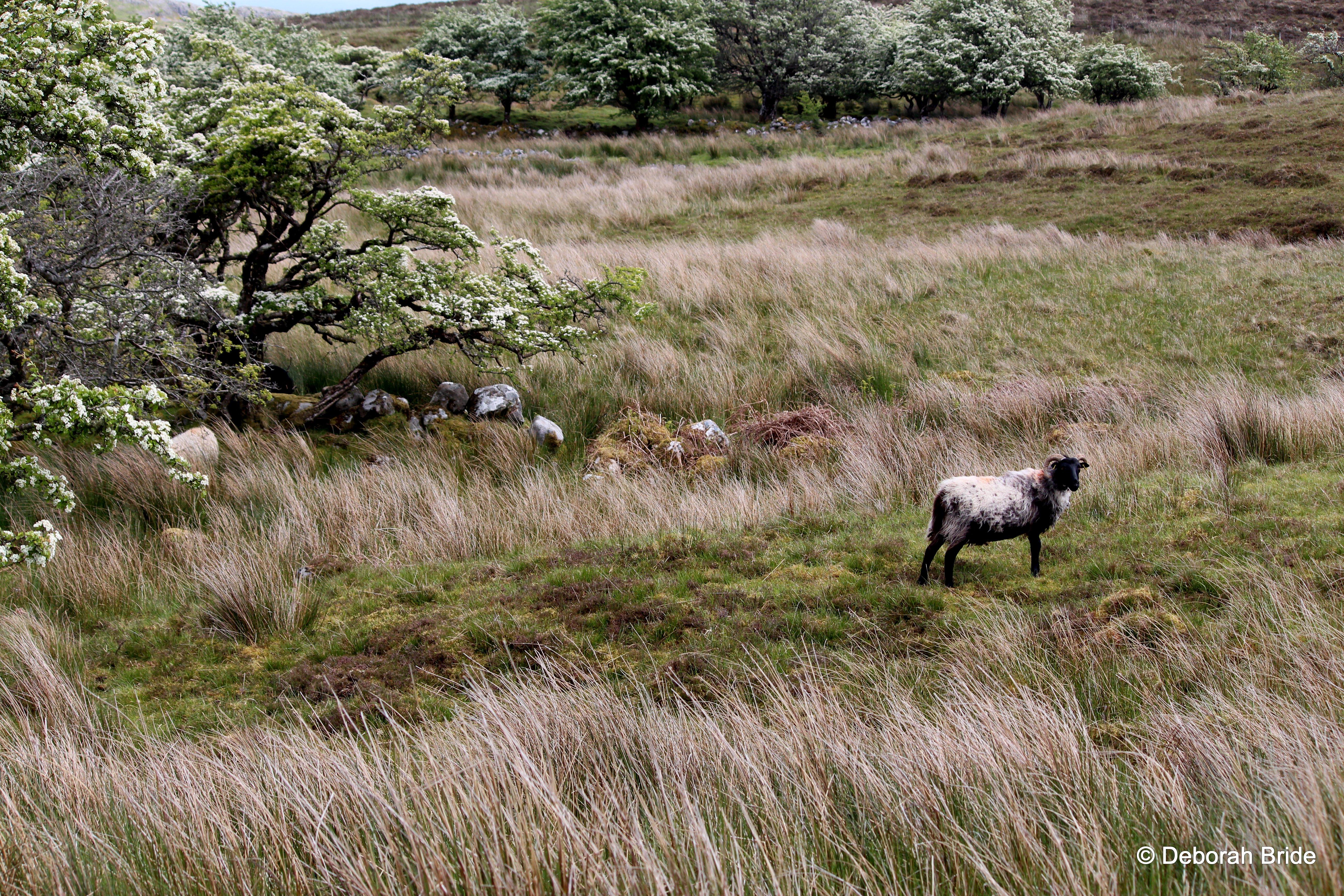 CuilcaghLegnabrocky - Crédit photo : Deborah Bride