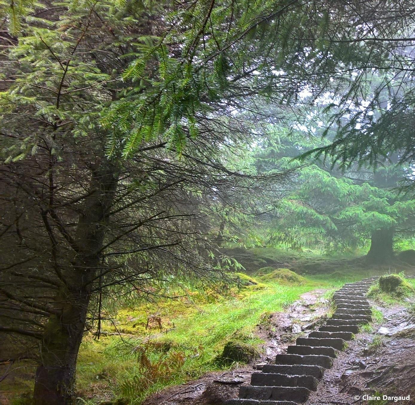 Crédit photo : Claire Dargaud, Entrée dans la forêt féérique sur le chemin bleu